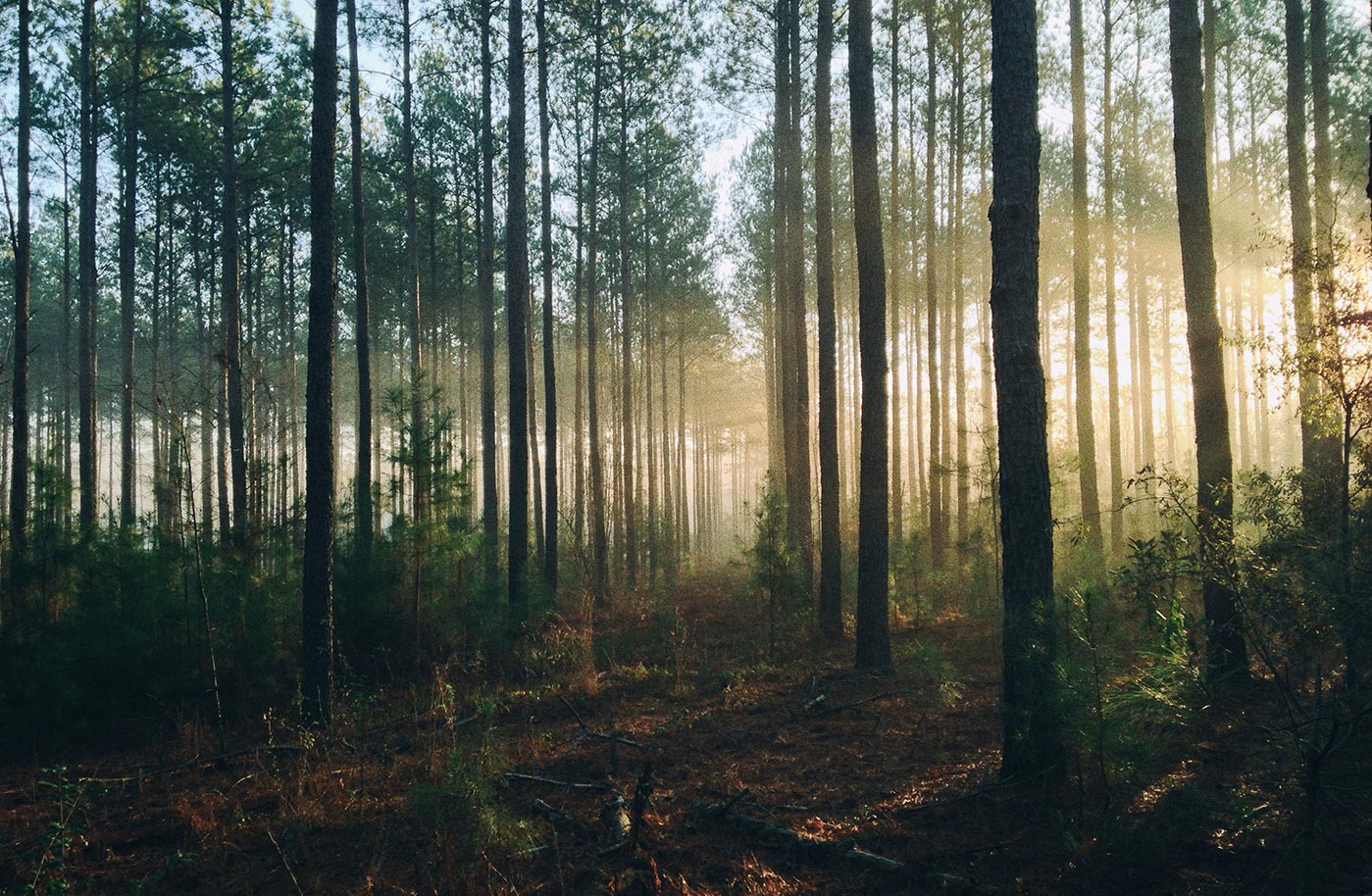 From the Woods to the World – Evangel Magazine